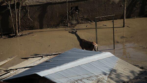 Затопленный зоопарк в Тбилиси. Июнь 2015