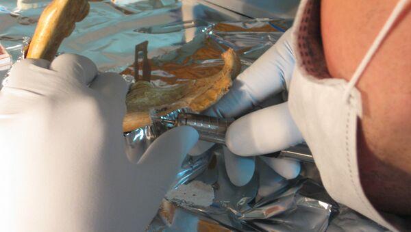 Специалист из лаборатории Паабо забирает пробы костной ткани для воскрешения ДНК