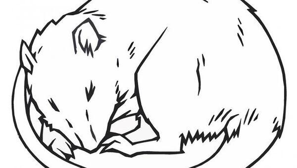 Спящая крыса. Рисунок художника