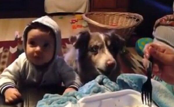 Пес научился говорить мама раньше ребенка