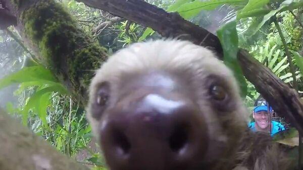 Ленивец из Никарагуа сделал селфи