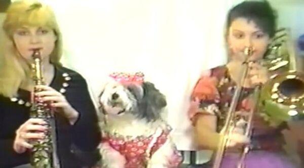 Оркестр с собакой