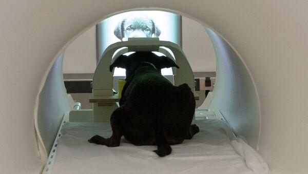 Собака внутри магнитно-резонансного томографа