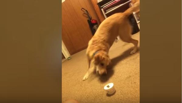 Собаки VS неодушевленные предметы