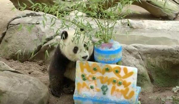 День рождения панды