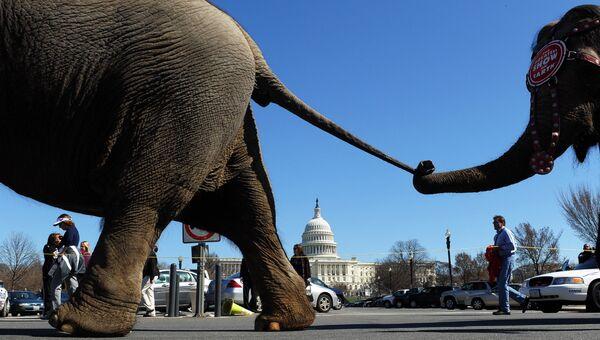 Слоны из Цирка братьев Ринглинг, Барнума и Бейли на Капитолийском холме в Вашингтоне, США