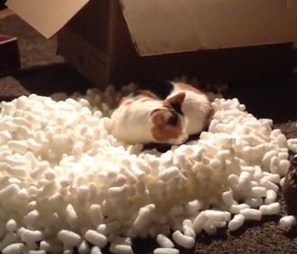 Котик - сюрприз