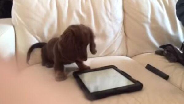 Игрушка для щенка