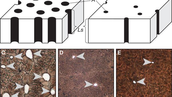 Слева – скорлупа динозавра с «крокодильей» кладкой, справа – с «птичьей» кладкой яиц