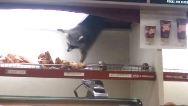 Охотник за пончиками