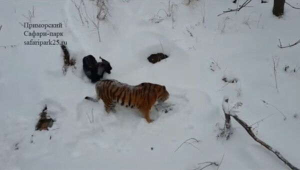 Амур и Тимур вместе укрылись от снега