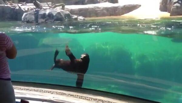 Морской лев перепугался, когда увидел, как упал ребенок