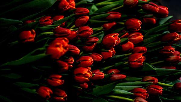 Срезанные тюльпаны. Архивное фото