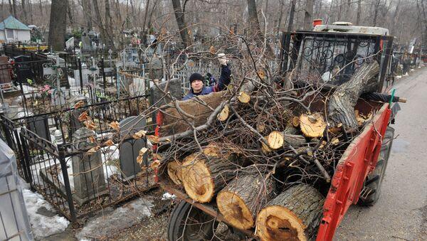 Уборка спиленных аварийных деревьев на кладбище