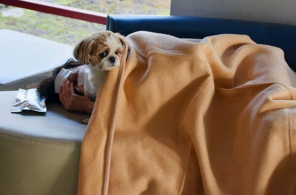 Местный житель с собакой в эвакуационном центре после землетрясения. Кумамото, Япония. Апрель 2016