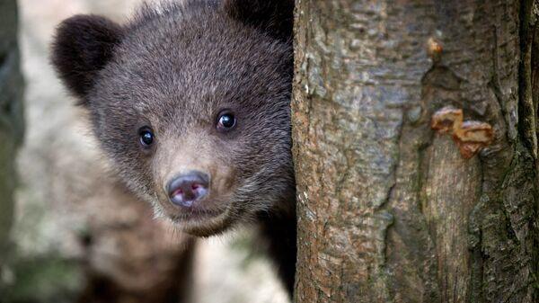 Медвежонок во вновь открывшемся зоопарке Сказка в Ялте