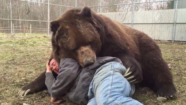 Почти домашний медведь