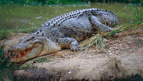 Крокодил затащил женщину-биолога ввольер и живьем еесъел