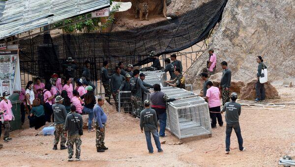 Вывоз тигров из Тигриного Храма в провинции Канчанабури, Таиланд. 30 мая 2016