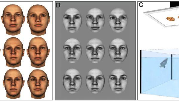Рыбки-брызгуны умеют различать лица людей