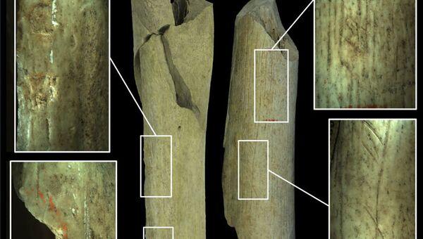 Кости неандертальцев, съеденных соплеменниками