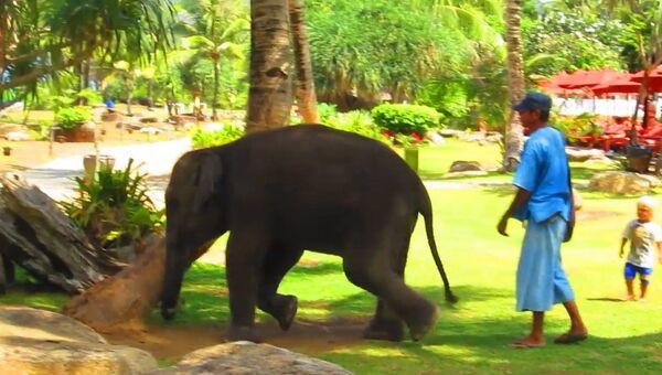 Дружелюбный слоненок