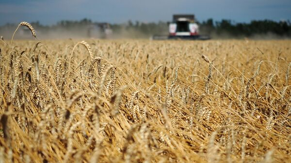 Уборка пшеницы в Краснодарском крае. Архивное фото