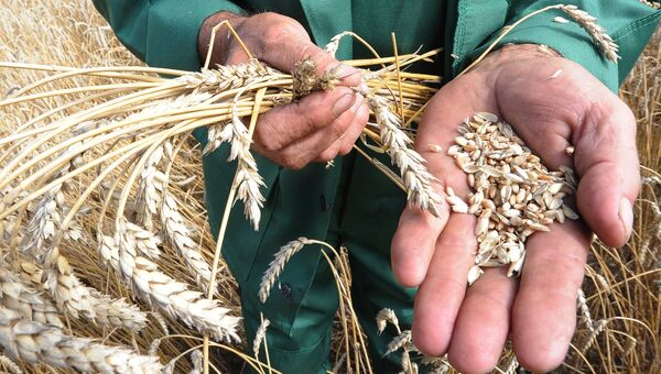 Уборка зерновых в Челябинской области. Архивное фото