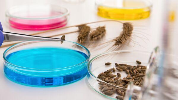 Лабораторные тесты с семенами ГМО-злаков. Архивное фото