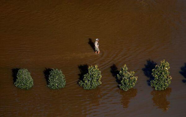Человек идет по затопленной улице после урагана Мэтью в  Ламбертоне, Северная Каролина. 10 октября 2016