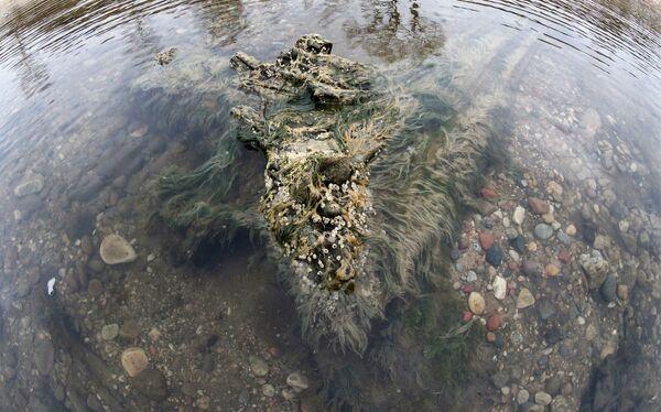 Берег Балтийского моря, где вода отступила от берега на 20 метров, обнажив останки реликтовых деревьев