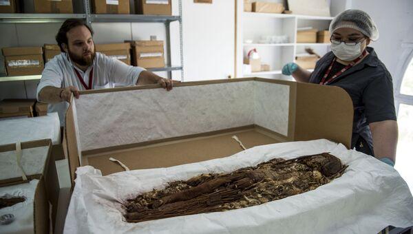 Антрополог Вероника Силва демонстрирует мумию, изготовленную индейцами чинчорро, в Национальном музее естественной истории Чили. Декабрь 2016