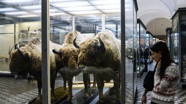 Посетитель в зоологическом музее Санкт-Петербурга