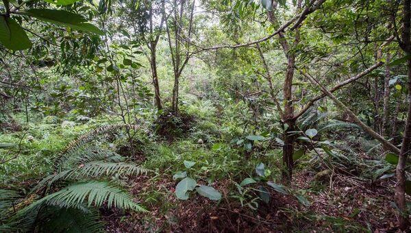 Двенадцать военнослужащих Британской армии спрятались в джунглях в Брунее