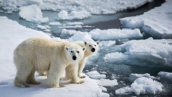 Год экологии – повод мобилизоваться для сохранения белого медведя