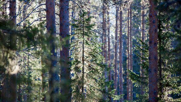 В Карелии начались работы по воспроизводству лесов