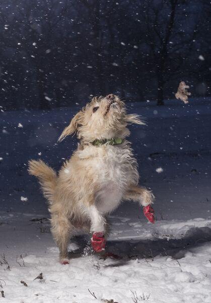 Работа победителя конкурса Dog Photographer of the year