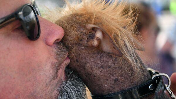 Китайская хохлатая по кличке Икки во время конкурса на звание самой уродливой собаки в мире