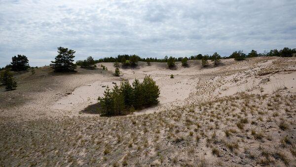 В песчаной части острова обитают енотовидные собаки. Здесь они роют свои норы