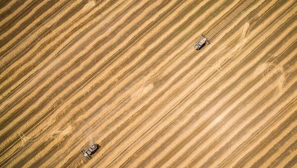 Сельское хозяйство. Архивное фото