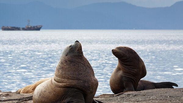 На Камчатке появился новый официальный праздник, посвященный защите морских животных