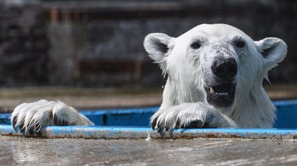 Белый медведь в центре воспроизводства редких видов животных Московского зоопарка в селе Сычево Московской области