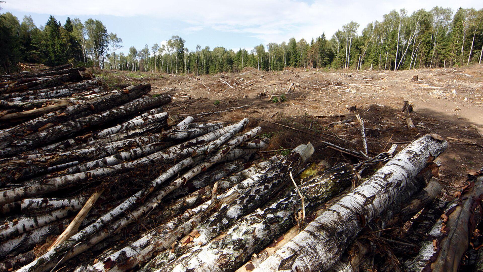 В Иркутской области запустили систему для борьбы с незаконными рубками леса - РИА Новости, 1920, 13.07.2020