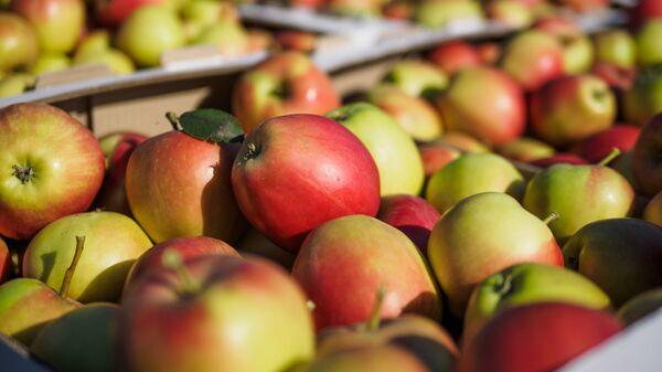 Яблоки. Архивное фото