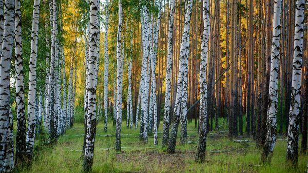 Для лесопарковых зеленых поясов утверждены особенности использования