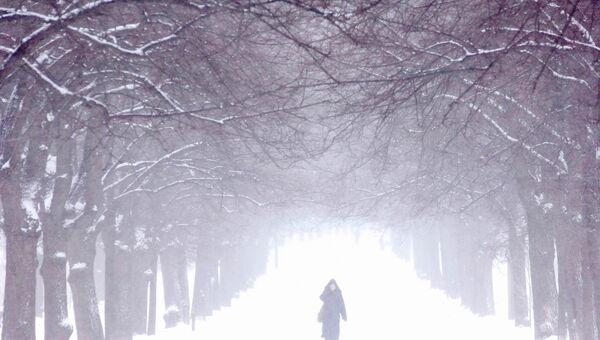 Москвичи смогут отпраздновать Новый год шашлыком в парке