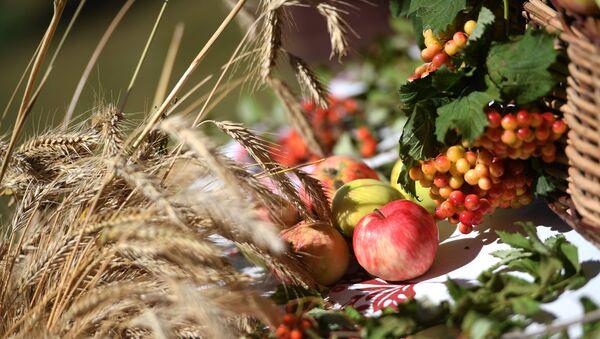 Колосья пшеницы и яблоки на столе. Архивное фото