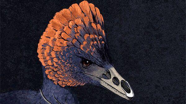 Птица-тинаму (снизу) и динозавр-анхиорнис (сверху)