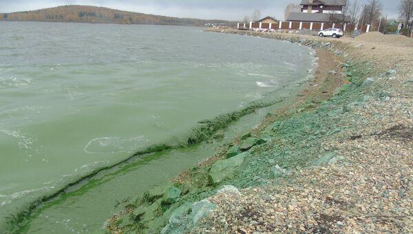 Позеленевшее Черноисточинское водохранилище под Нижним Тагилом