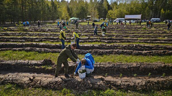 Волонтеры высадили несколько тысяч деревьев в национальном парке Угра